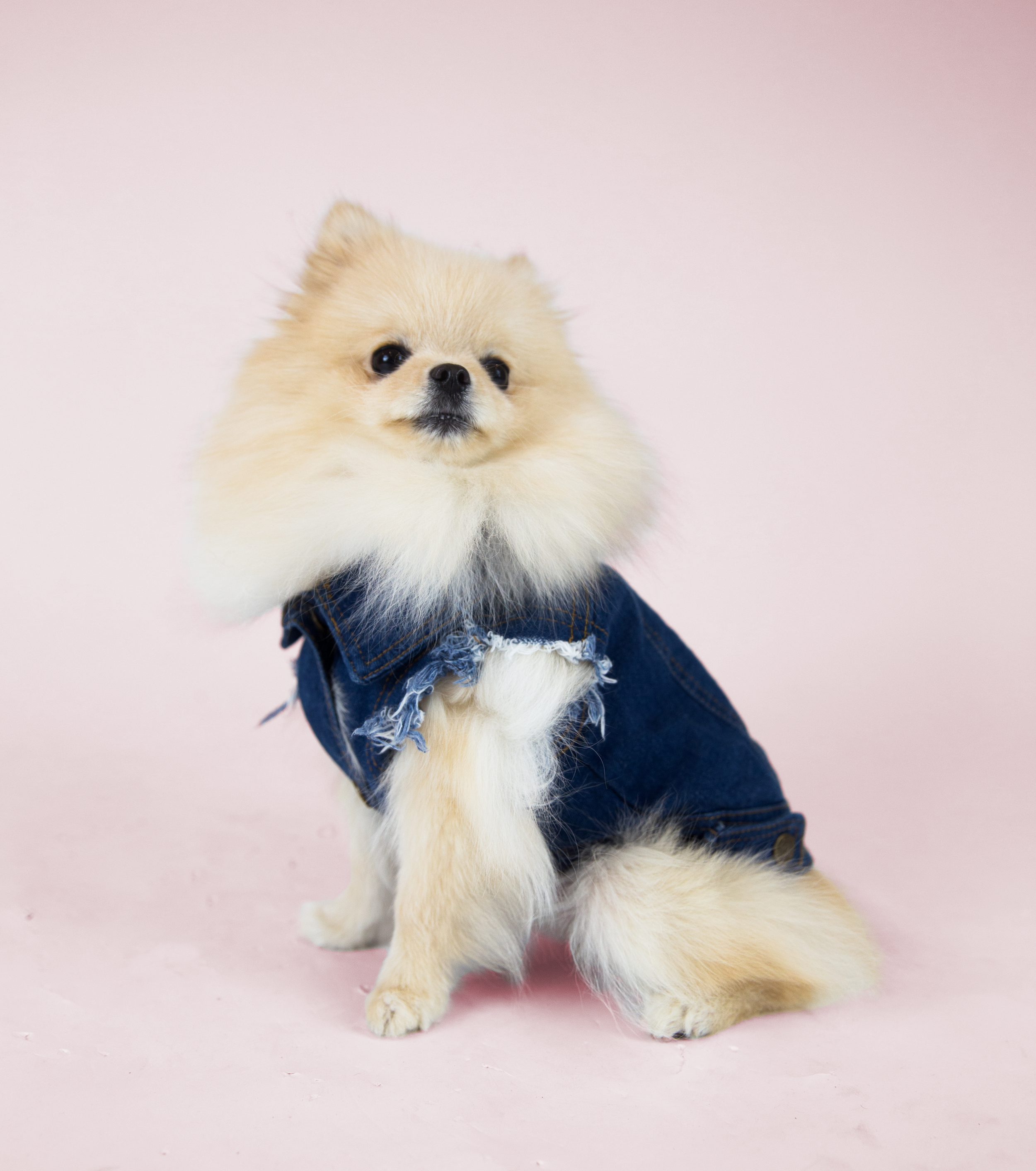 Favourite Goodboy Swag - Sophie looks great in just about anything, obviously.  But if she had to choose a favourite, you'd probably find her rocking the Barker Denim Jacket.