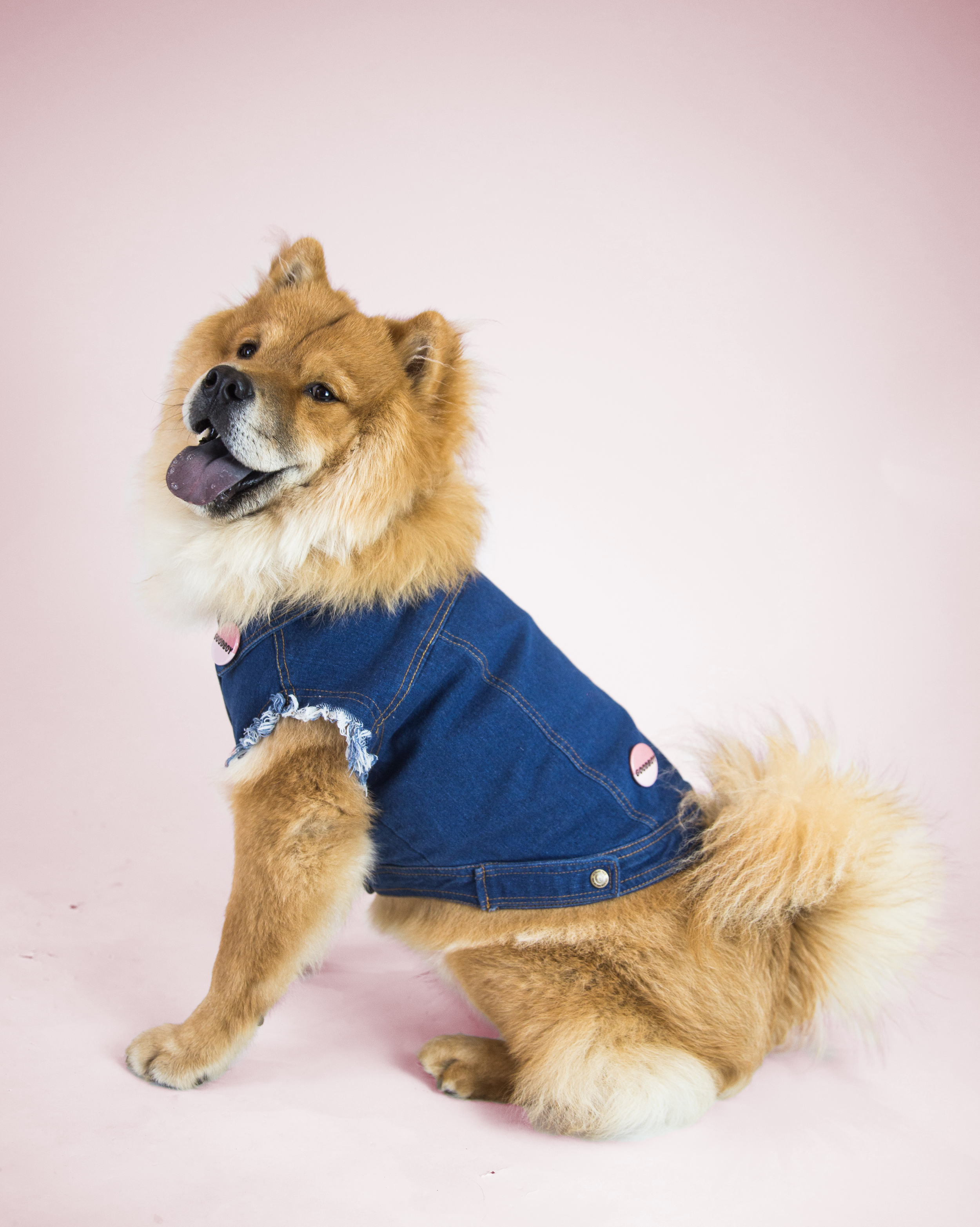 Favourite Goodboy Swag - Tofu loves to use clothes to accentuate his beautiful lion's mane.  His favourite outfit to rock is the Pethaus Raw Denim Vest.  He feels totally bad-ass in it.  We couldn't agree more.