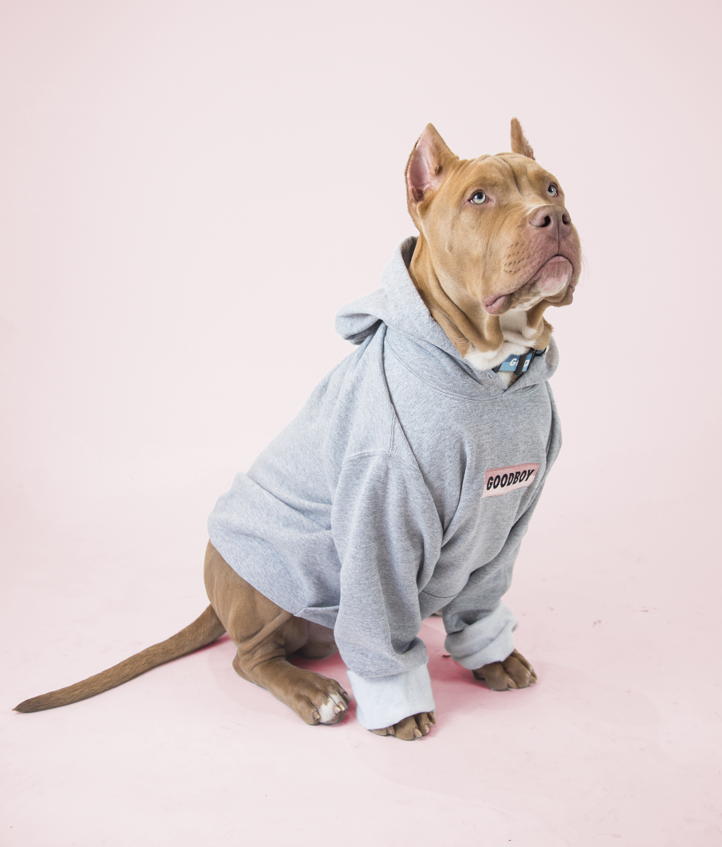 Favourite Goodboy Swag - Koa can rock just about anything due to his lean physique. Although, not everything can fit his larger build. His favourite is to chill out in his Goodboy Hoodie. He loves how comfy it is, and not to mention how cool he looks. We'd have to agree.