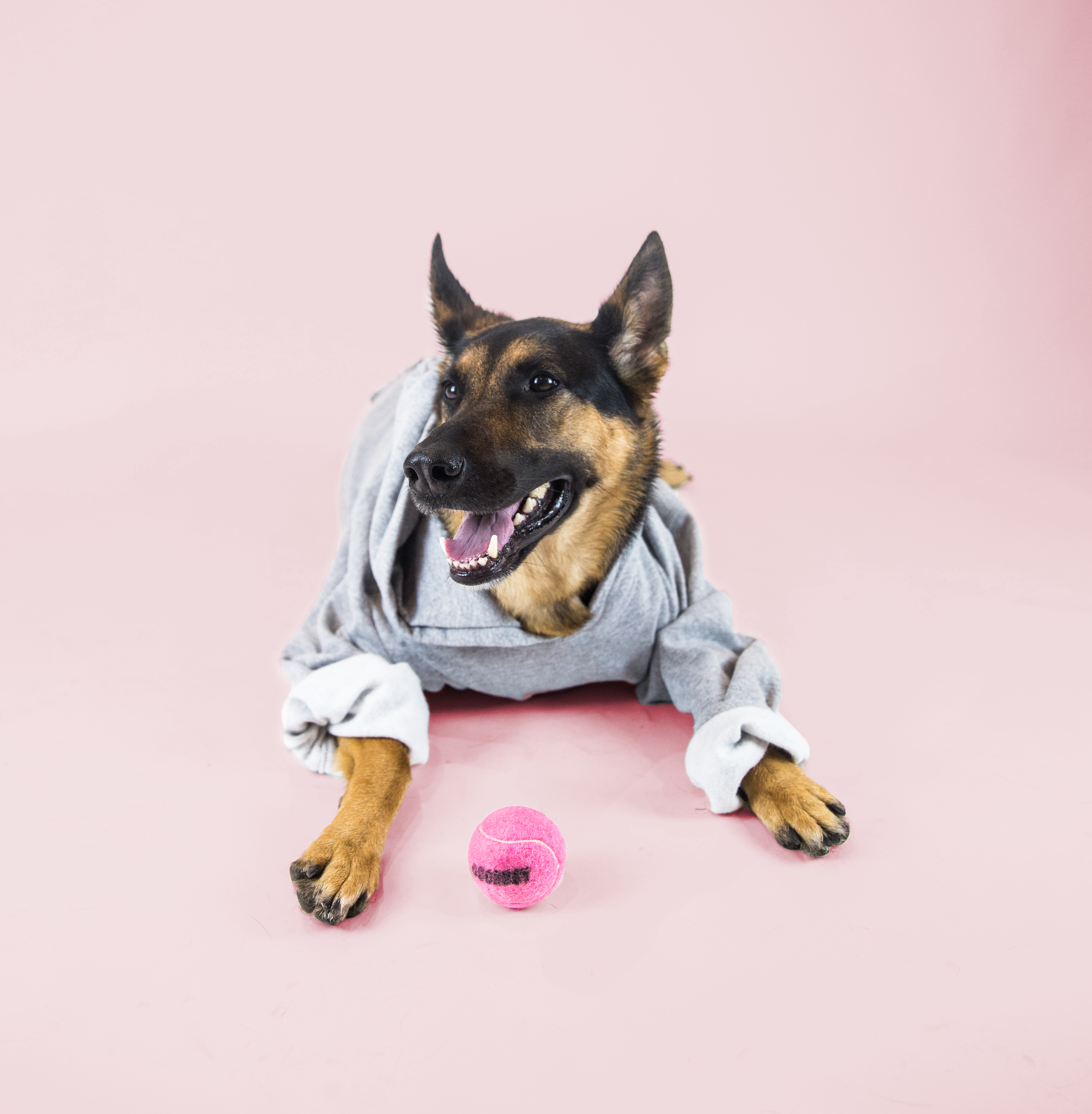 Favourite Goodboy Swag - Maya rocks the Goodboy Grey Hoodie with ease. And as you can see, pink looks great on her. Cue our Goodboy Goodgirl Pink Collar. But her absolutely favourite Goodboy swag would have to be the Goodboy Pink Ball. #Ballislife, afterall.