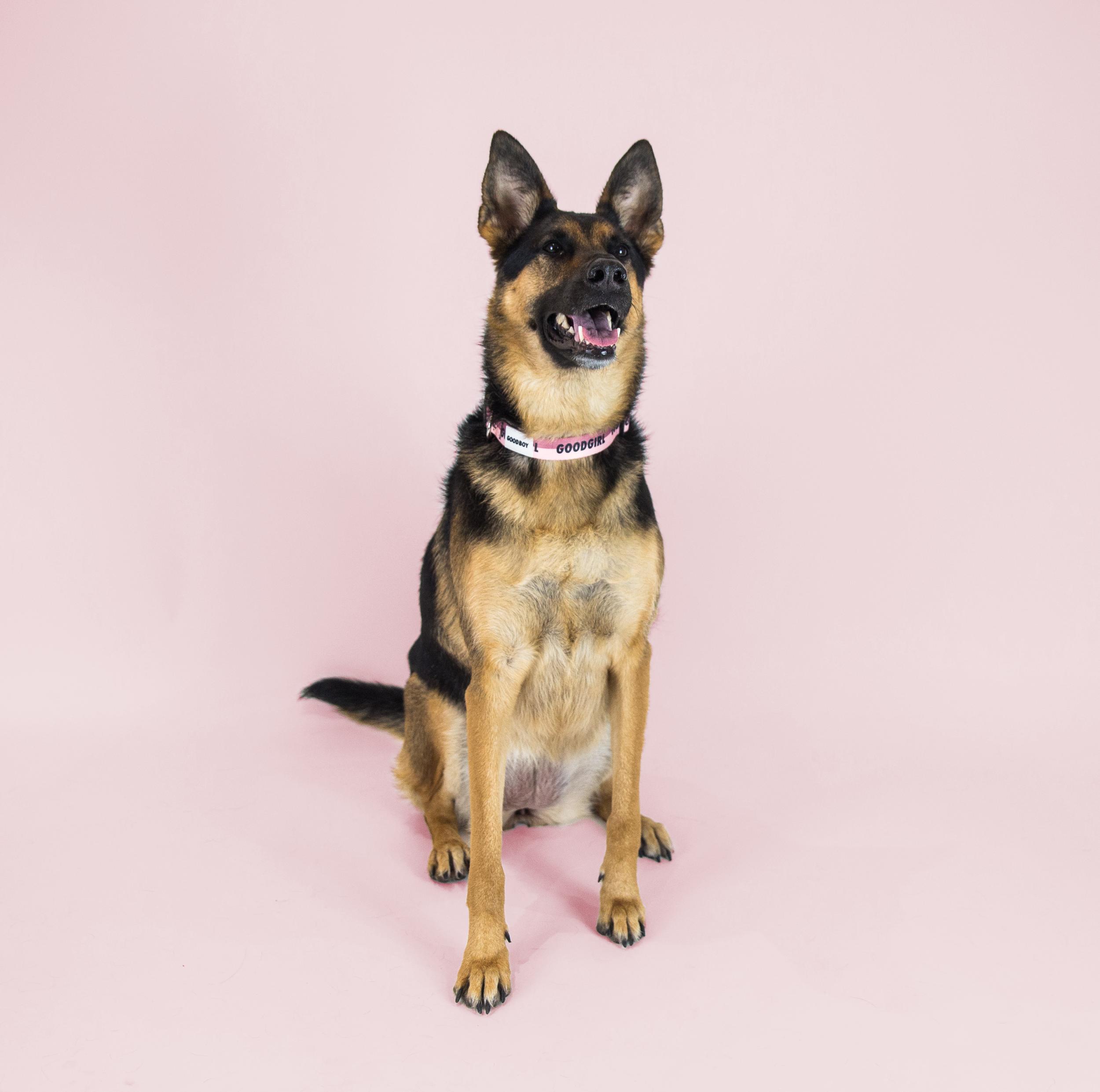 Meet Maya. - Breed: German Shepherd MixHometown: Toronto, Ontario