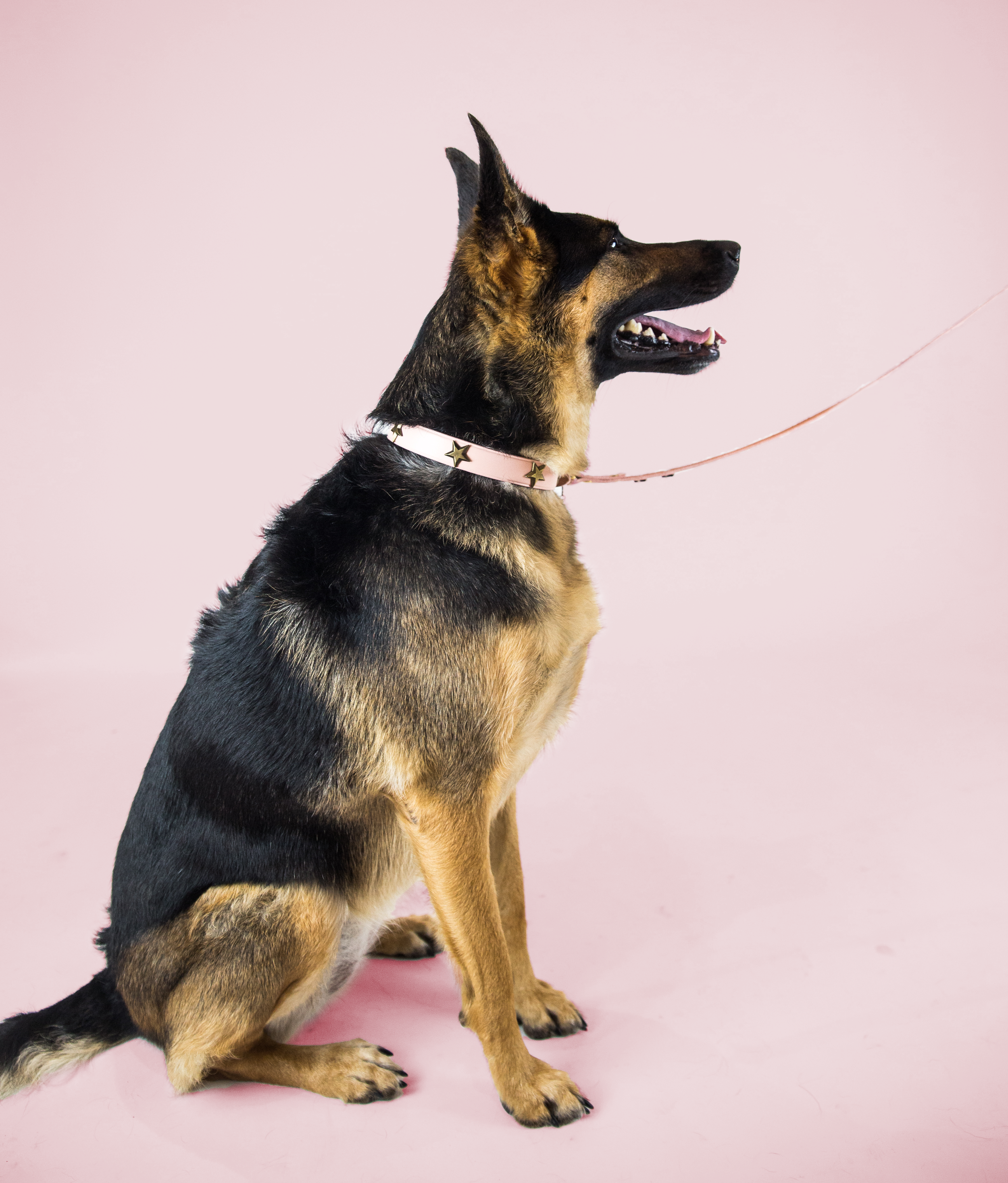 Sweet Maya - While Maya may be a big dog, she acts like a big puppy most of the time. She's often afraid of heights and can even get a little scared of small puppies at time. Talk about sweet.