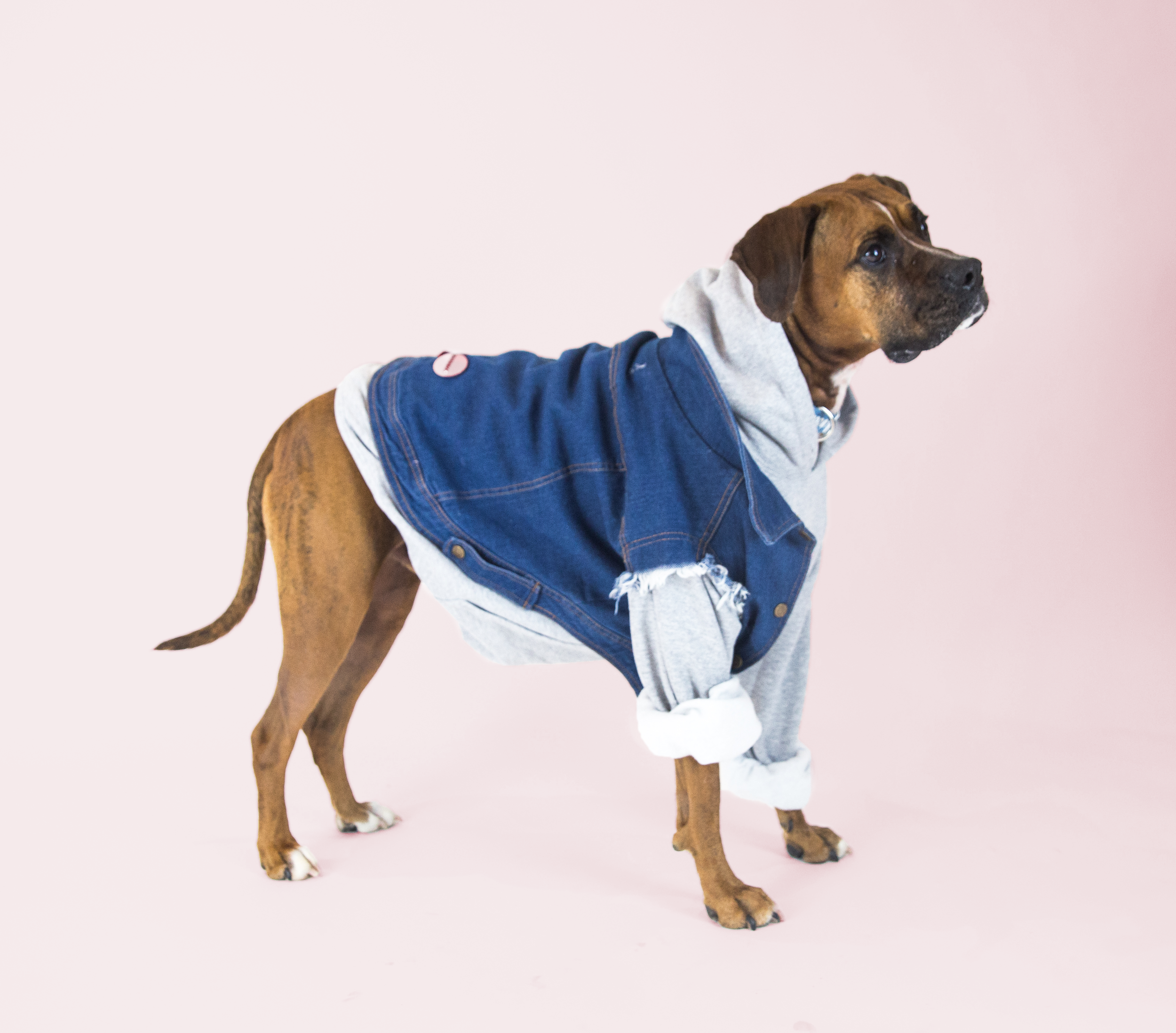Favourite Goodboy Swag - A fan favourite, the Pethaus Raw Denim Vest. Bruno looks fab in just about anything. But right now he's really digging the denim look, especially layered with the classic Goodboy Grey Hoodie.