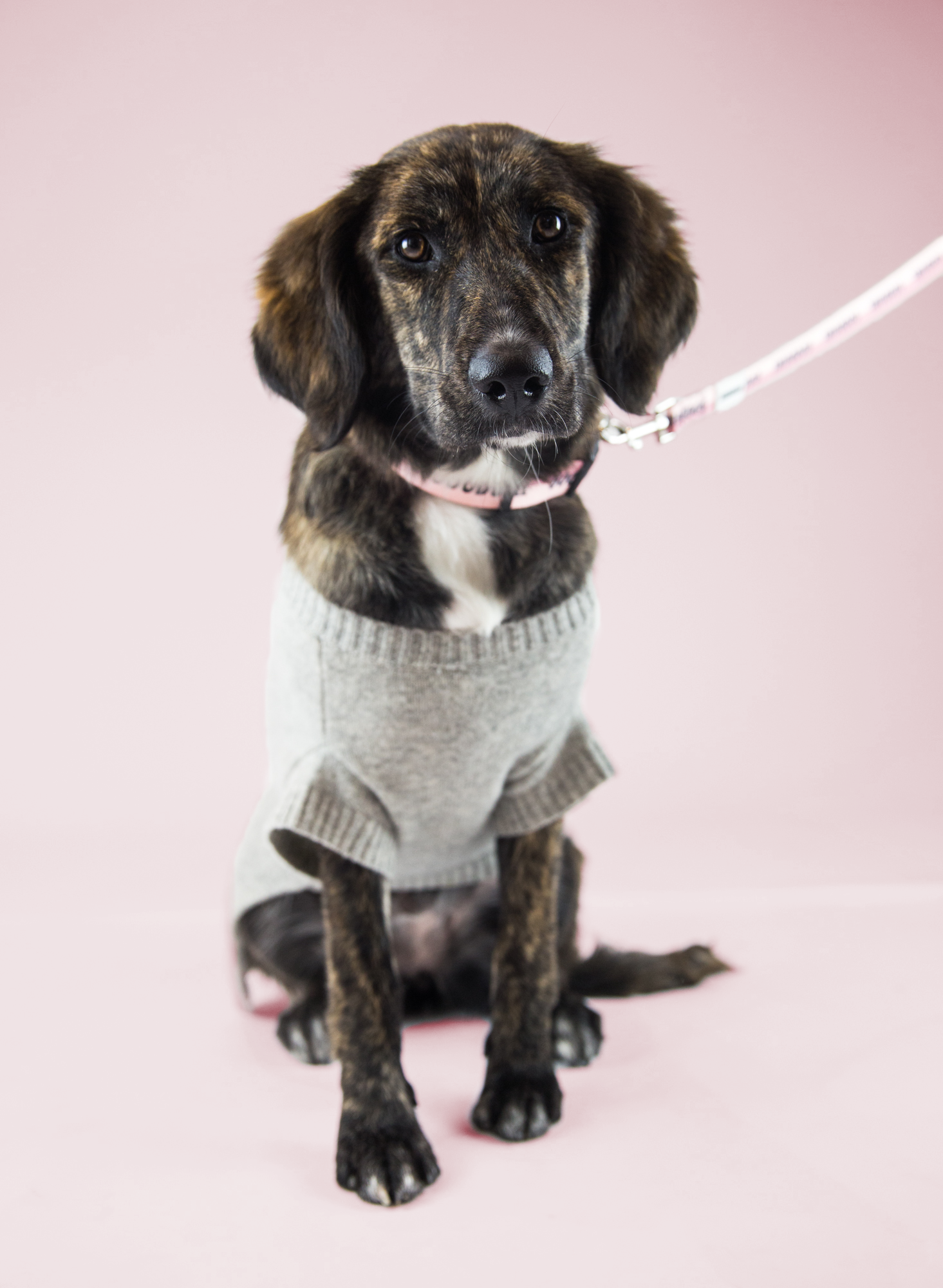Favourite Goodboy Swag - Murphy's unique colouring makes it easy to look good in just about anything. She loves the Pethaus Raw Denim Vest, of course. She also picked up the Goodgirl Collar, because well, she's a very good girl. Oh, and she happens to look great in pink.