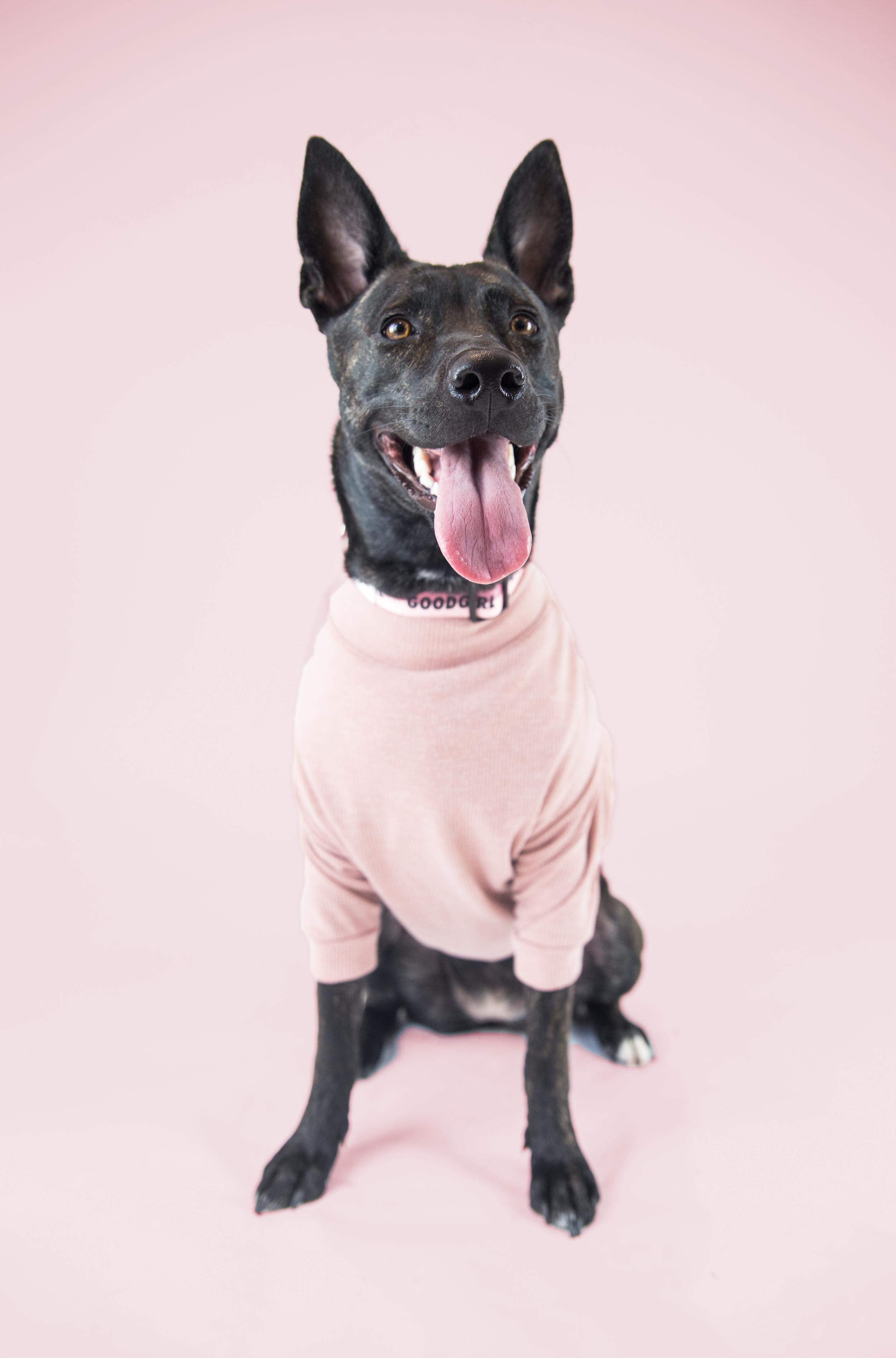 Meet Satoshi. - Age: 15 monthsBreed: Staffy, German Shepherd, Siberian Husky MixHometown: Caledon, Ontario