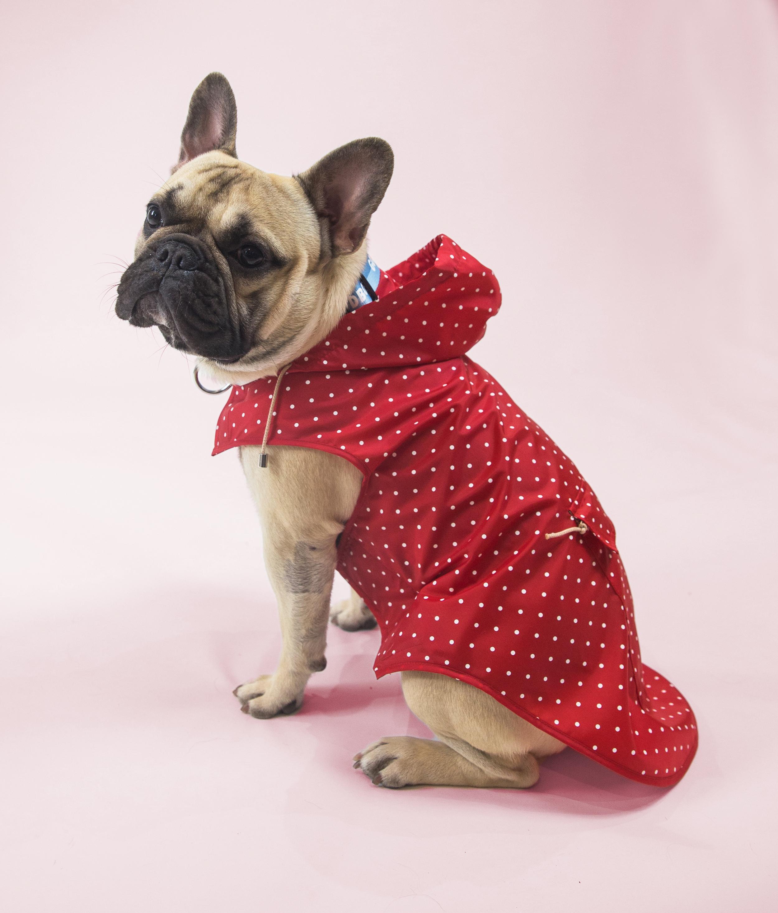 Meet Sir Chad. - Age: 1 yearBreed: French BulldogHometown: Toronto, Ontario