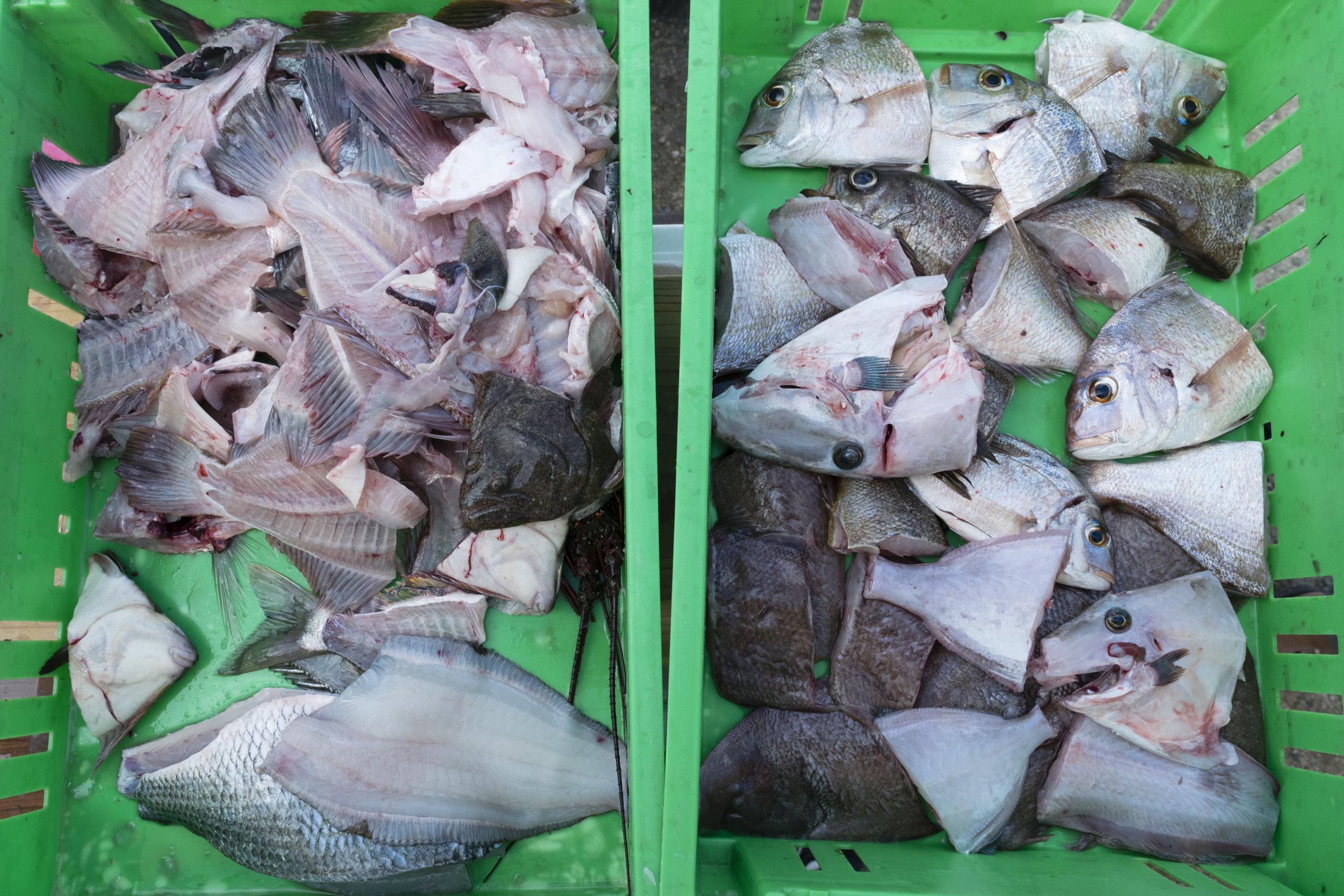 jibikiami_farmersmarket_yutakato_-31.jpg