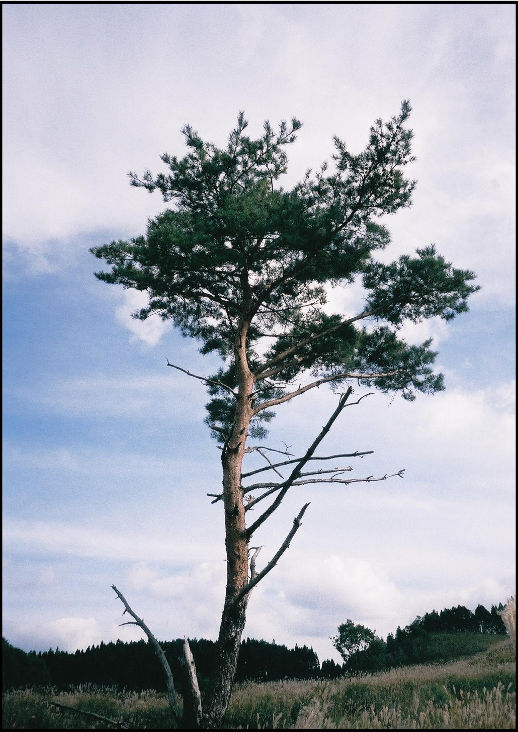 190828_wood_03.png