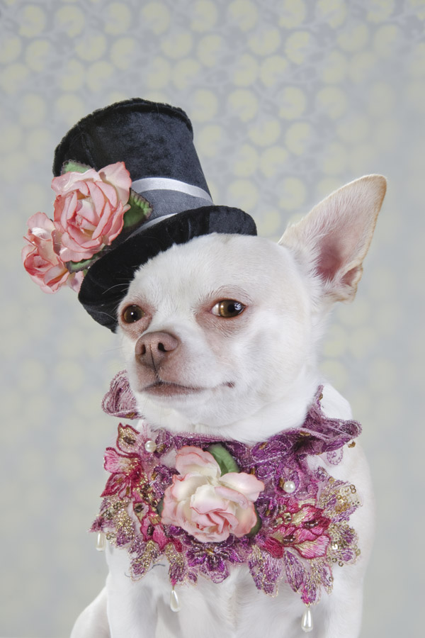 THESE DOGS ARE MORE CHIC THAN YOU  THESE DOGS DON'T SHOP AT OLD NAVY