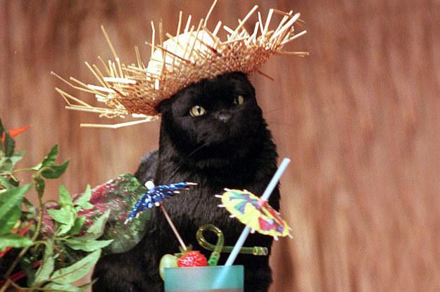 SALEM THE CAT'S BEST COSTUMES  SASSY CAT FASHION