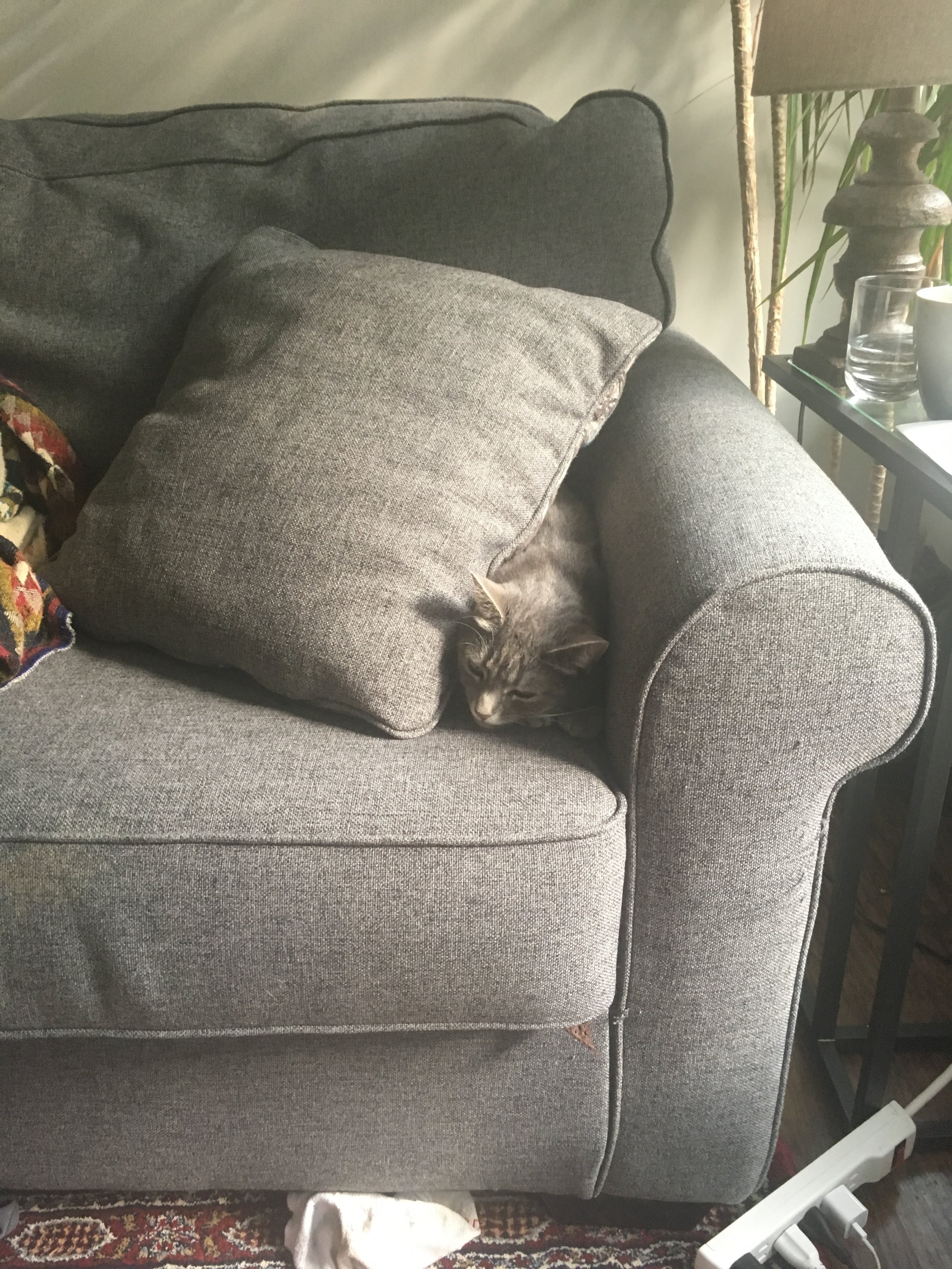Because camouflaging yourself into the couch isn't always the best option.