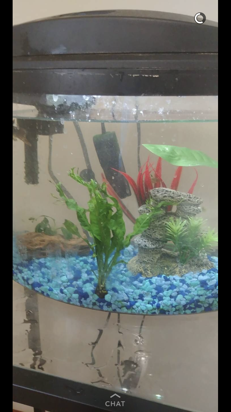 Humbert Humbert's new aquarium set up #om101 offended millennial