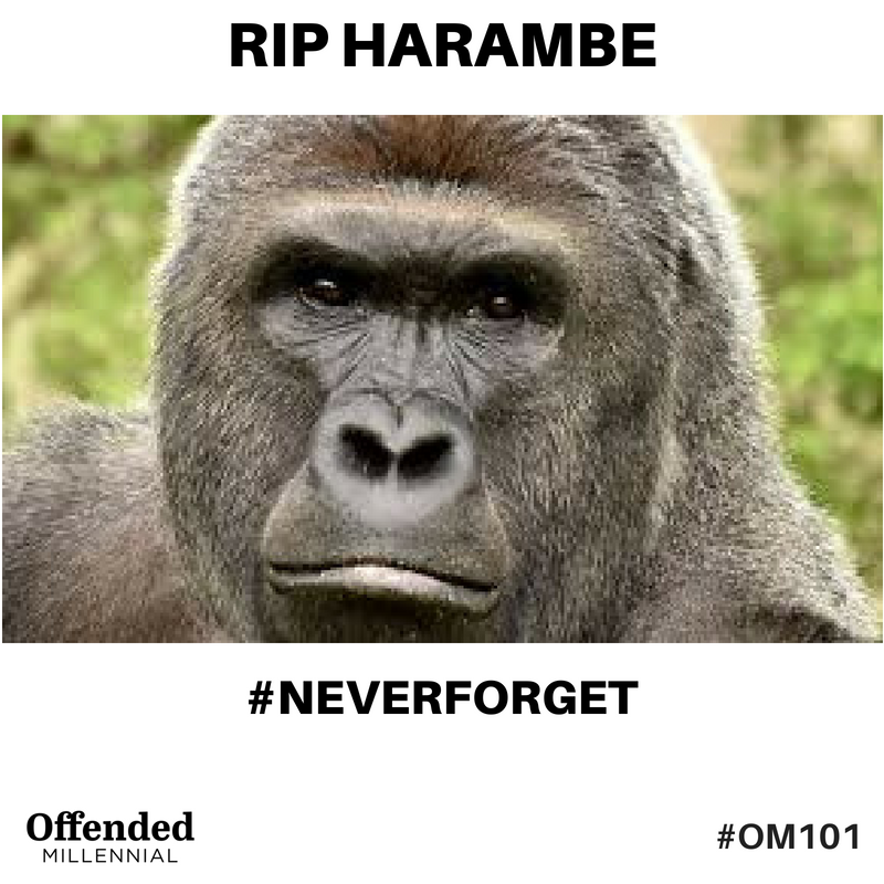 RIP Harambe meme. #NeverForget #OM101 Offended Millennial
