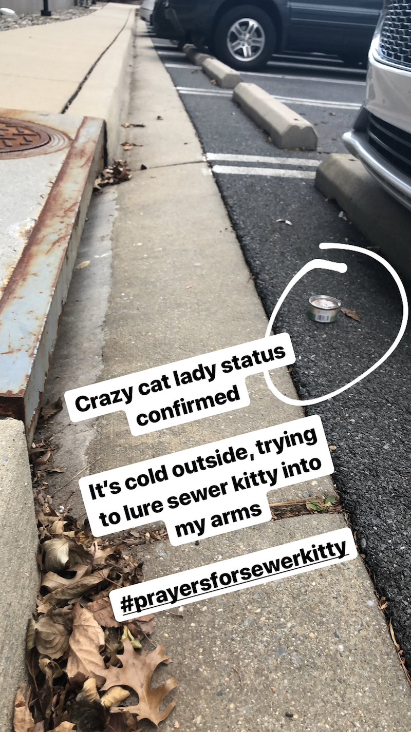 life lately winter edition sewer kitty offended millennial