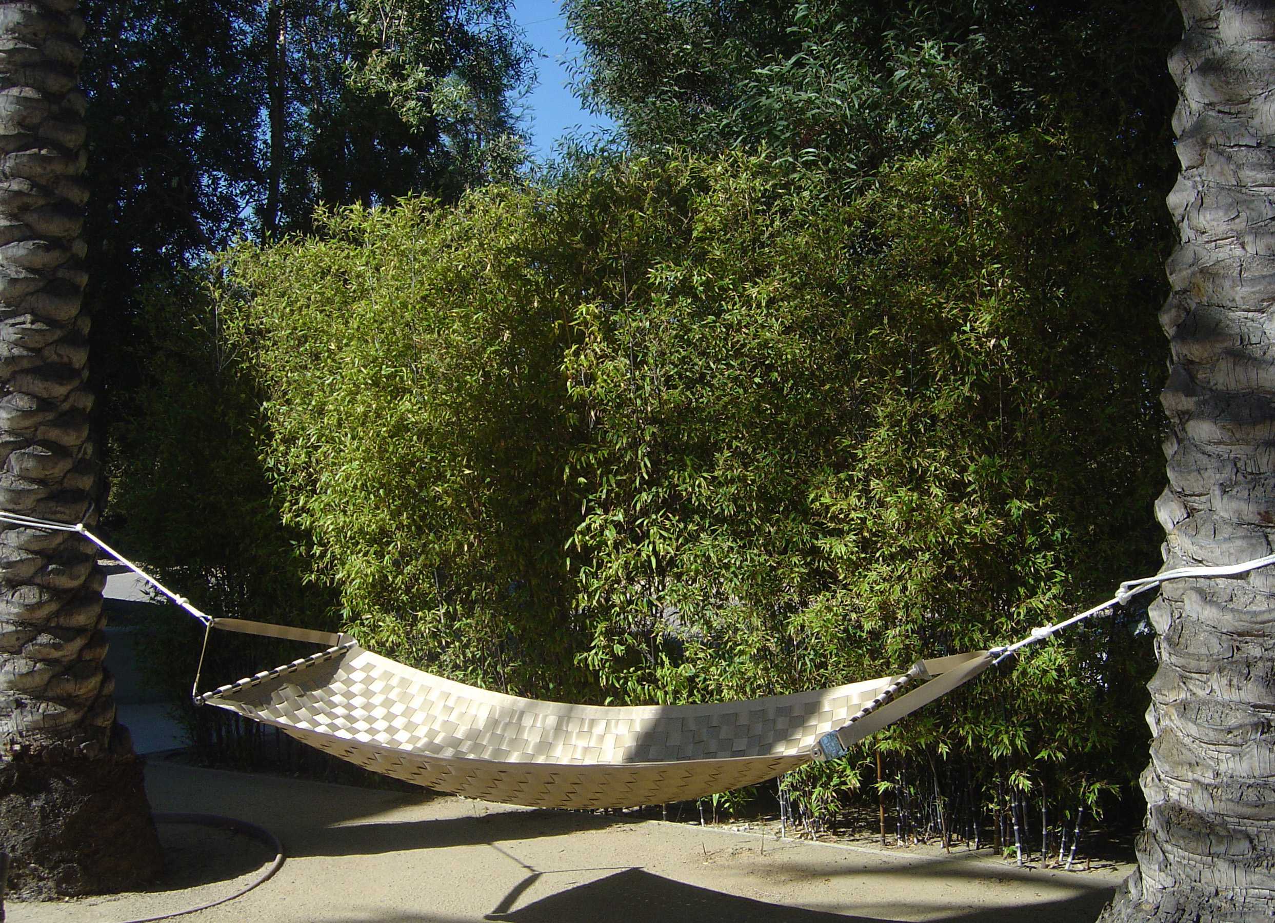 Champagne Ting Sling seatbelt hammock, hanging between two palm trees in an outdoor environment.