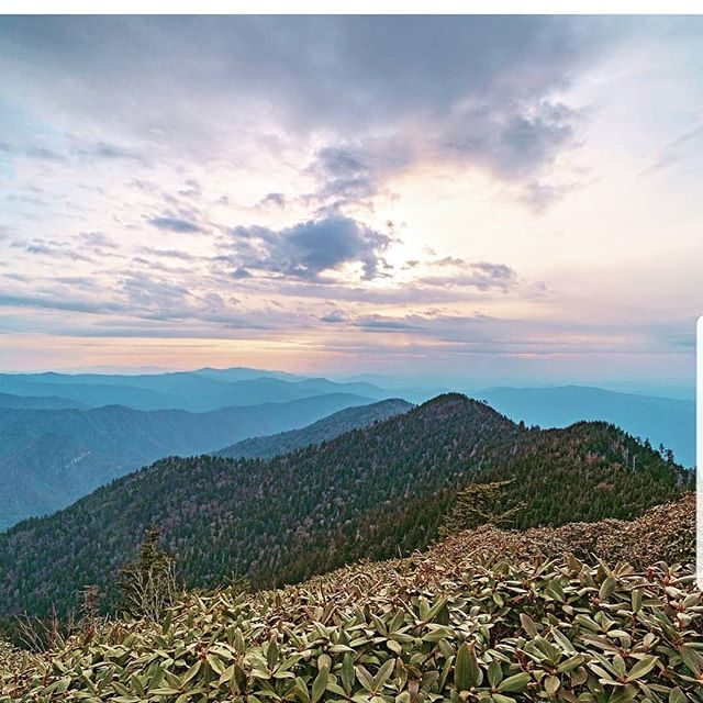 Sunday all National Parks are free entrance to celebrate  @nationalparkservice's anniversary. What's your favorite? Ours may be @greatsmokynps but there are so many we have yet to visit! . . . . . . . . . . . . . .#nationalparkservice #nps #nationalpark #getoutside #outdoors #naturelover #rei1440project #outdoorist #outside #liveoutside #adventure #free #coloradooutdoors