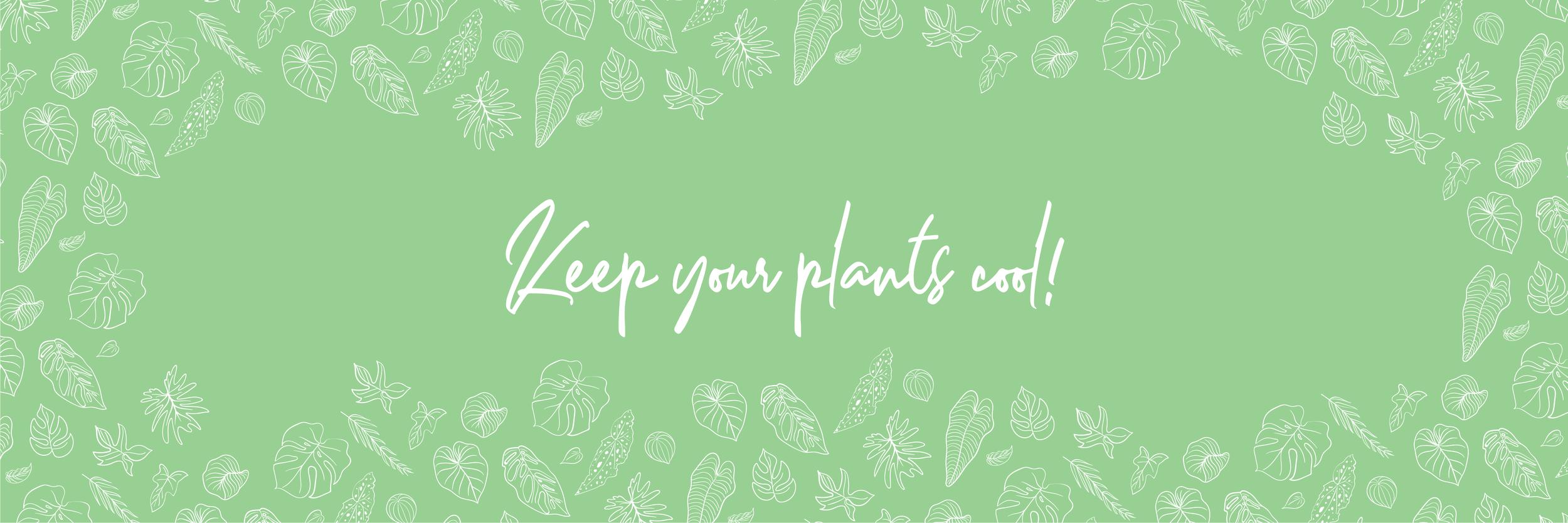 PLANTS-03.png