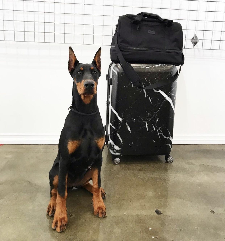 Astyll Luggage + Stevyn Duffel Bag w/ @frankie.doberman -