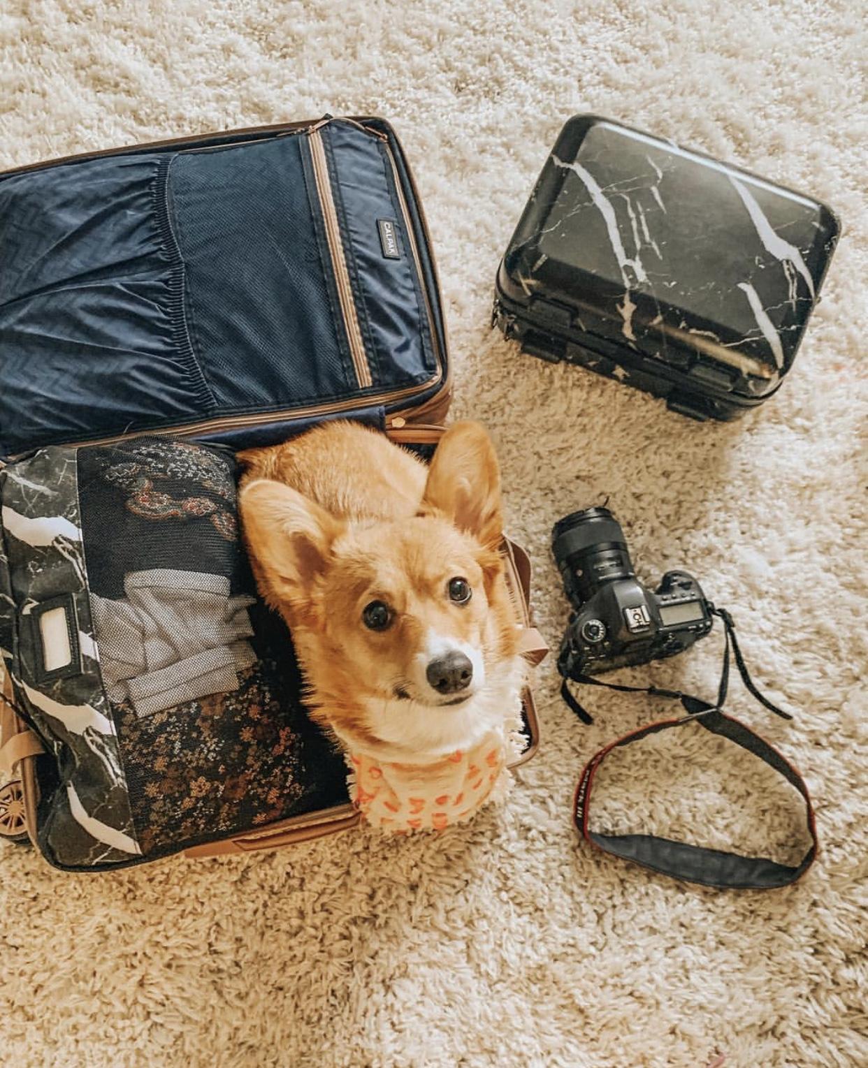 Ambeur Luggage + Vanity Case w/ @rosiegirlthecorgi -