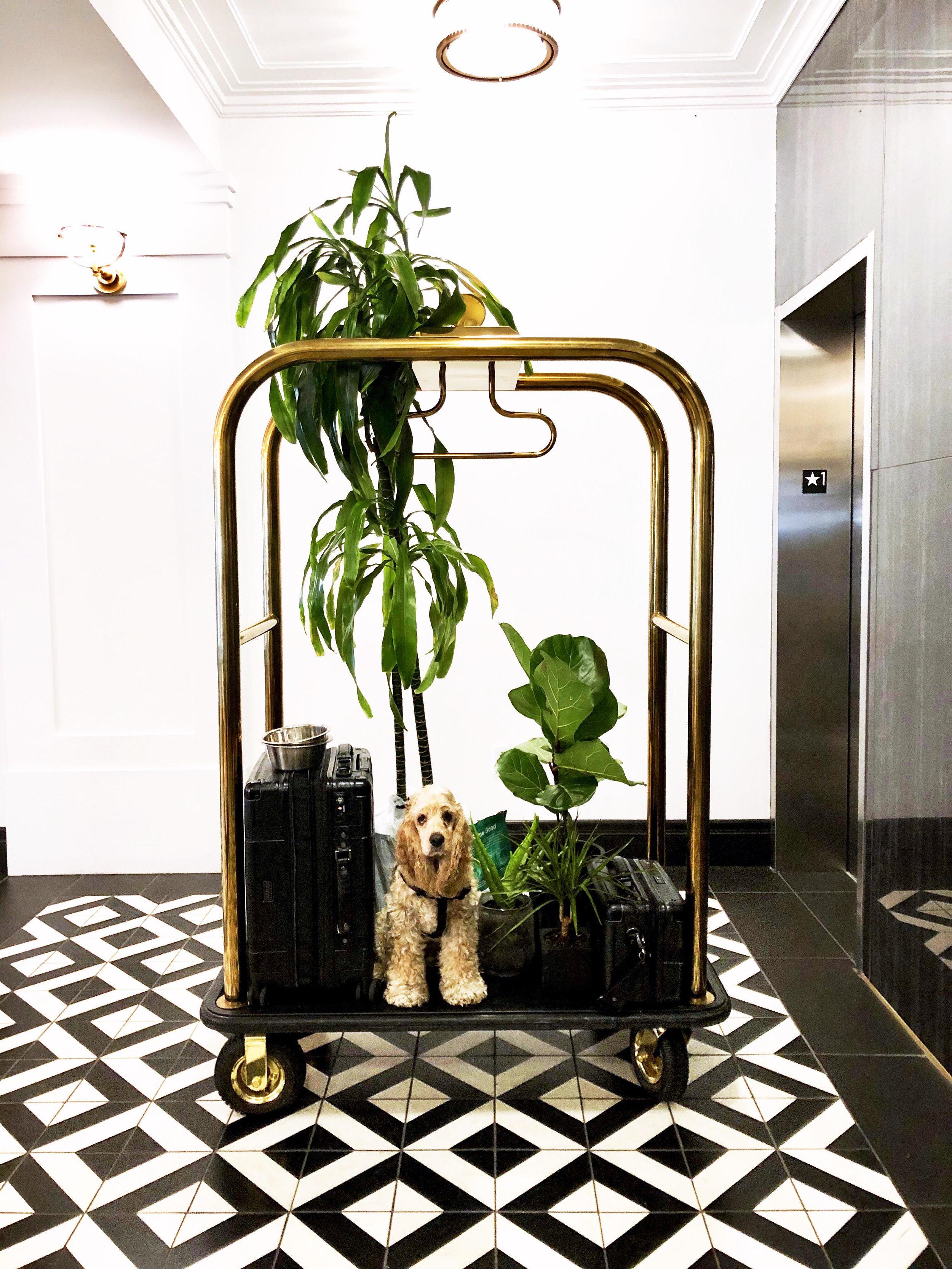 Trnk Luggage + Vanity Case w/ @hachu_thedog -