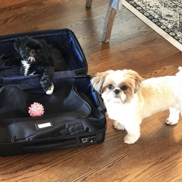 Ambeur Luggage w/ @lifeoflouisandlola -