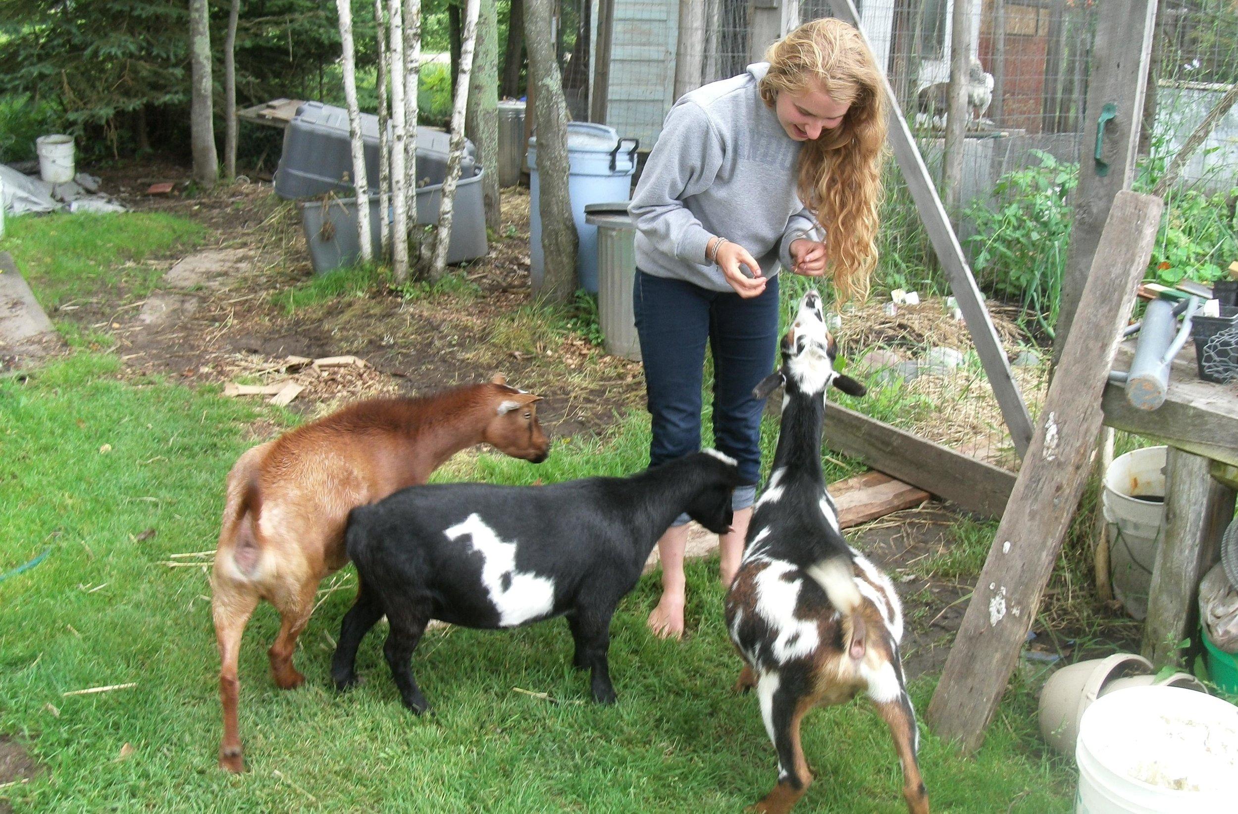 Kalista and goats.jpg