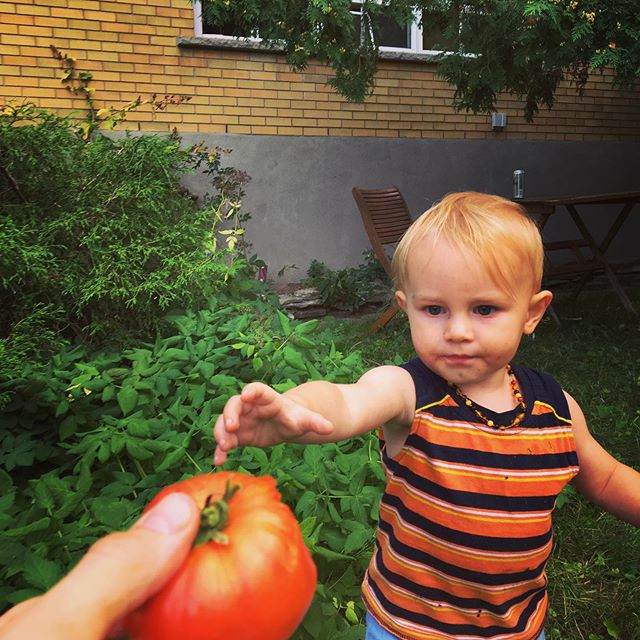 An organic tomato from our garden. #urbanfarming, #healthyfood, #local, #familymatters.