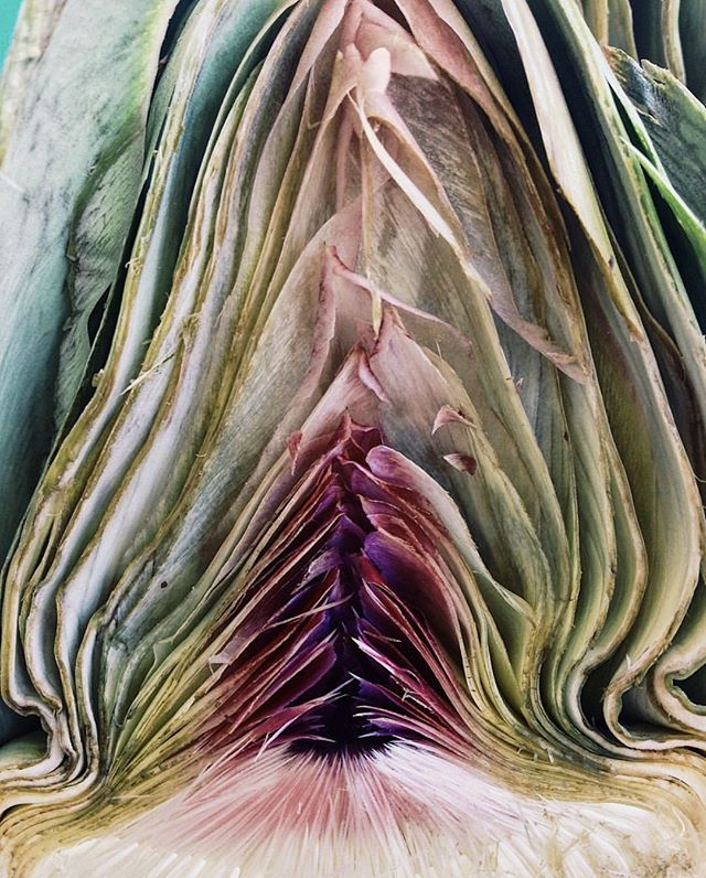 Sacred feminine is found everywhere in nature. Proud, peaceful, beautiful, unique. @natureyoni celebrating that natural form.⁣ ⁣ ⁣ ⁣ #artichoke #nature #yoni #yonilove #yoniverse #yoniart #womb #labia #ladyparts #pussy #pussypower #vivalavulva #vulva #vulvaart #vagina #vaginaart #feminine #femalebody #embraceyourbody #vaginalove #vaginaismagical #myvaginaismagical #birthfit #sacredfeminine #natural #wildfeminine #naturalfeminine #fertility #birthfitbend
