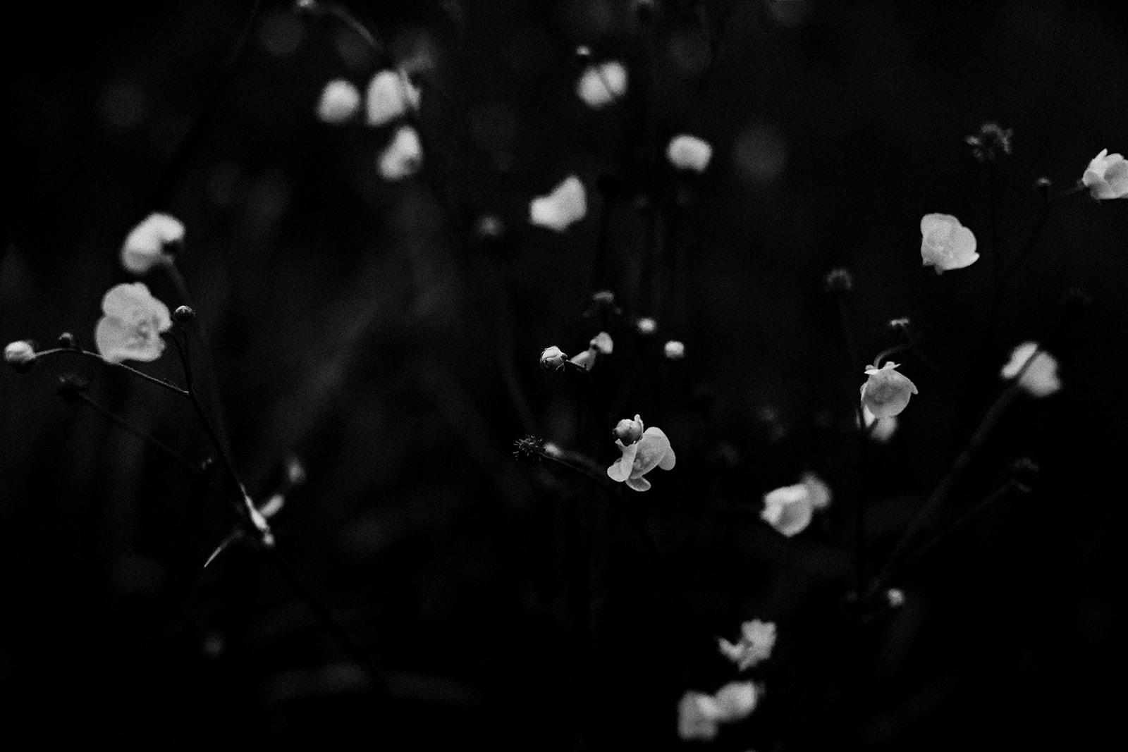 Rachael_Sommessa_Photography14.jpg