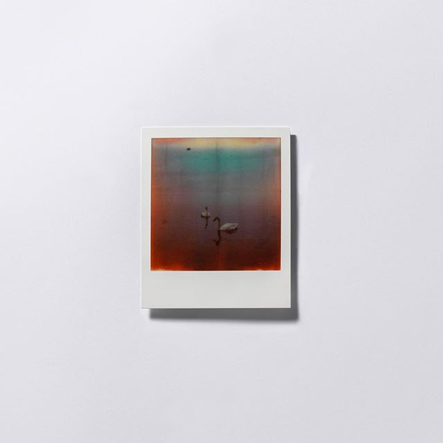 【RAW Feature】 「特意選用寶麗來,因它色彩上的難以控制,如同一種隱喻,正是我們當下面對災害局面的感覺。色彩的異化,也代表了福島問題是肉眼看不見的觸感。」黃勤帶說道。(Link in Bio)  #ProjectRAW #Art #Culture #photography #interview #creation #artist #projectrawhk #hongkong #rawfeature #fukushima #japan #polaroid #photobook #wongkantai #fineart #series #hongkongphotography #filmphotography #film #japanphoto #hongkongart #hongkongartist #hkig