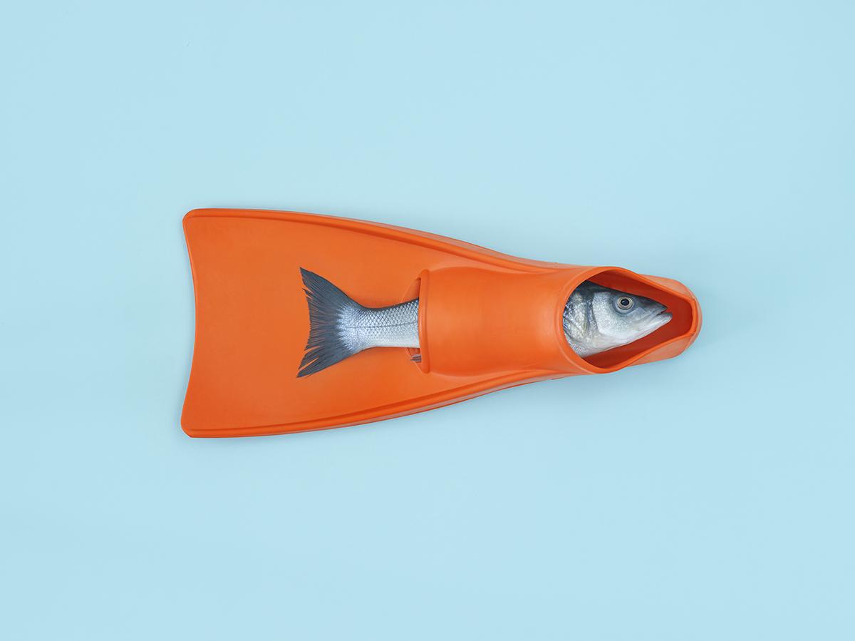 personal_how do fish sleep.jpg