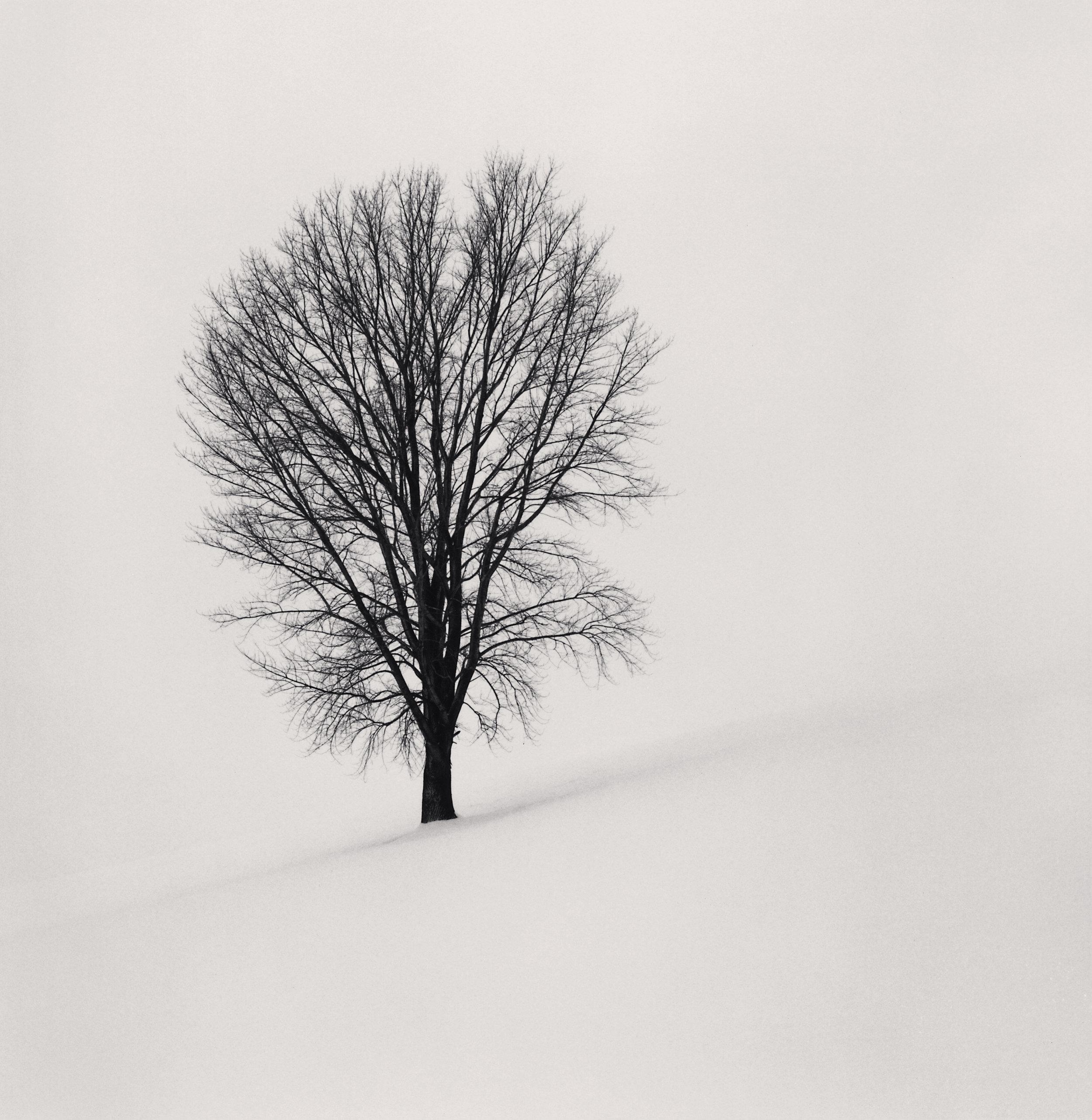"""©Michael Kenna""""Philosopher's Tree, Study 1, Biei, Hokkaido, Japan. 2004"""""""