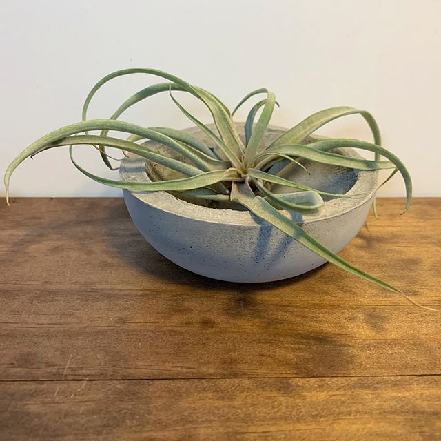 Another one of our newer shapes. Check out our planters this weekend at The Big Wonderful! @thebigwonderful . . . #airplant #planter #planter #TheBigWonderful #concreteplanter #gift #holidays #houseplant #plantsofinstagram #plantdecor #handmade #shoplocal #madeincolorado #denver #shopdenver #concretedecor #denverart #colorado #succulents #succulove