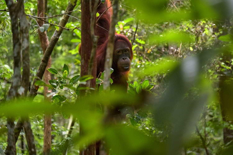 earthlinks jorge franganillo monkey trees grees_1.jpg