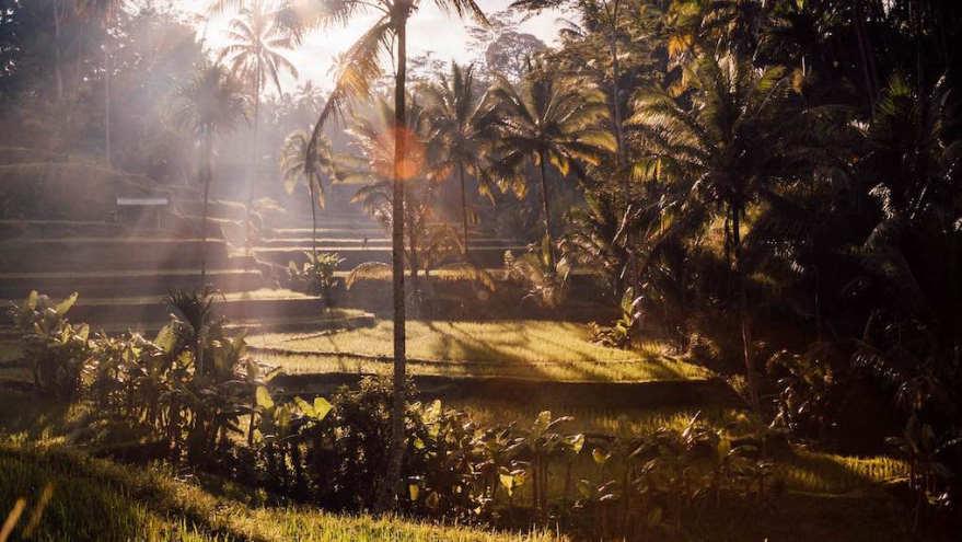 earthlinks srilanka trees garden.jpg
