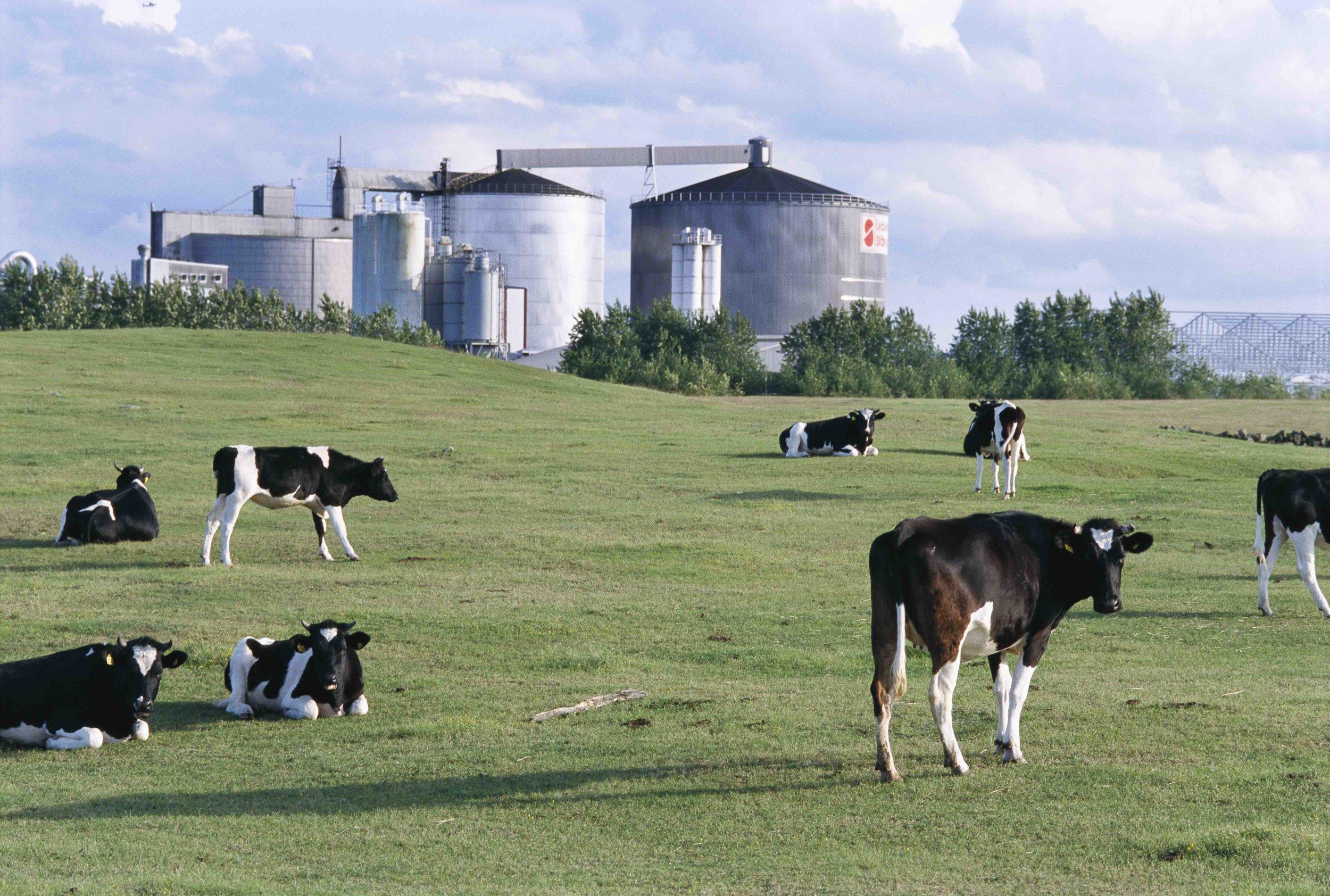 dairies.jpg