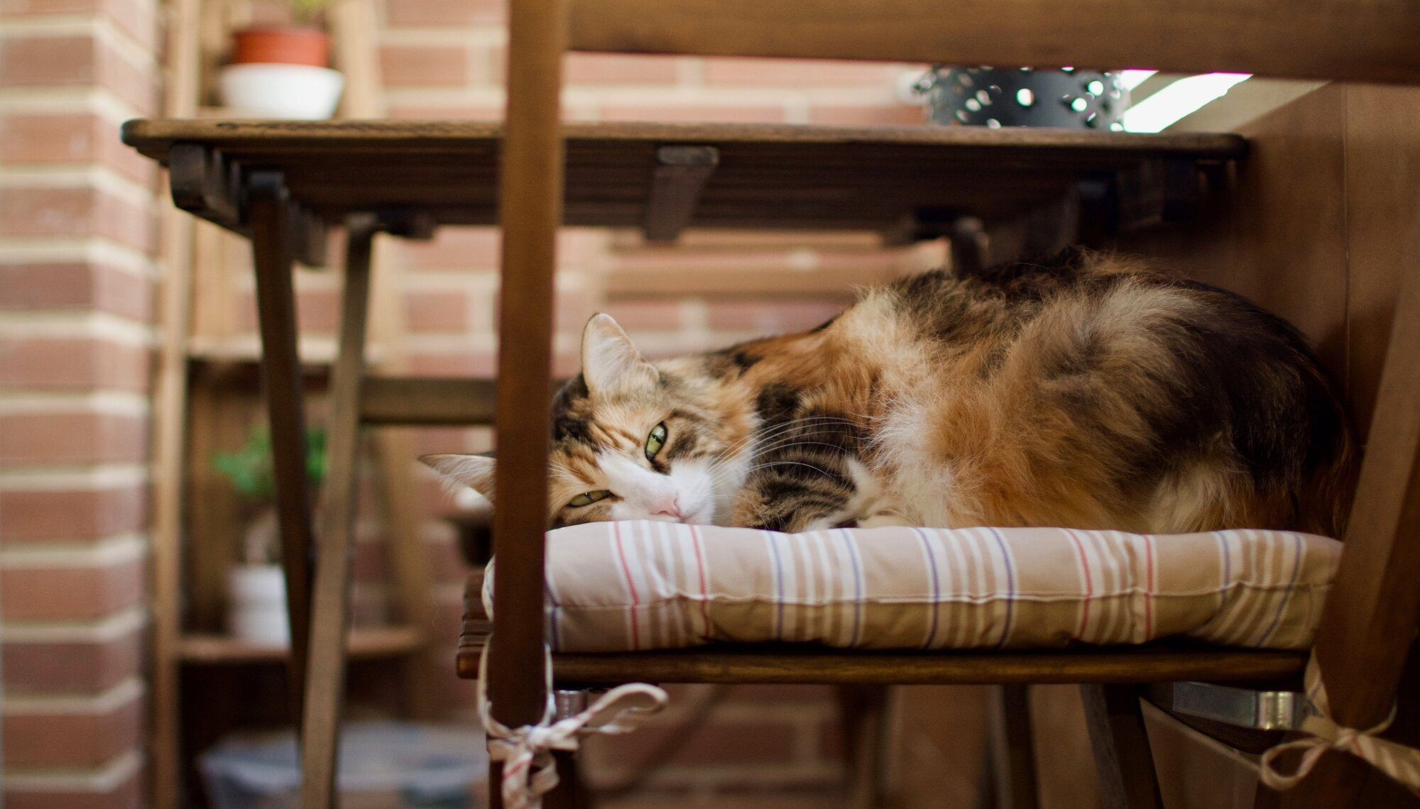 The Market - Feeding Time: A Healthy Diet For Your Cat