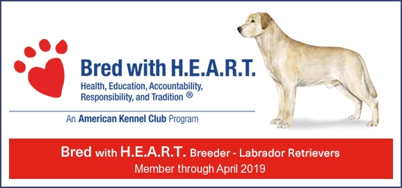AKC Bred with HART.jpeg