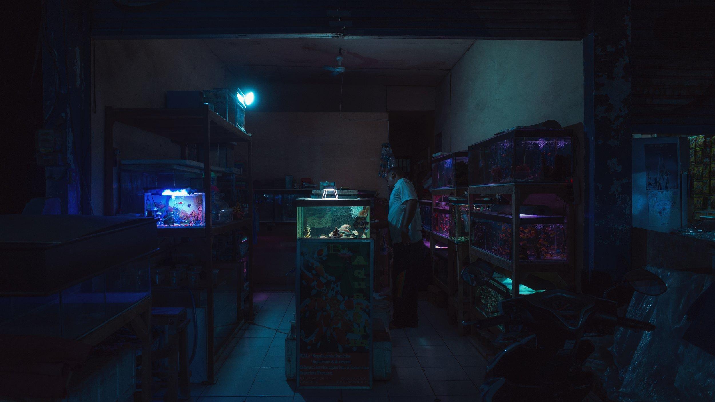 bali fish shop by jevgenij tichonov.JPG
