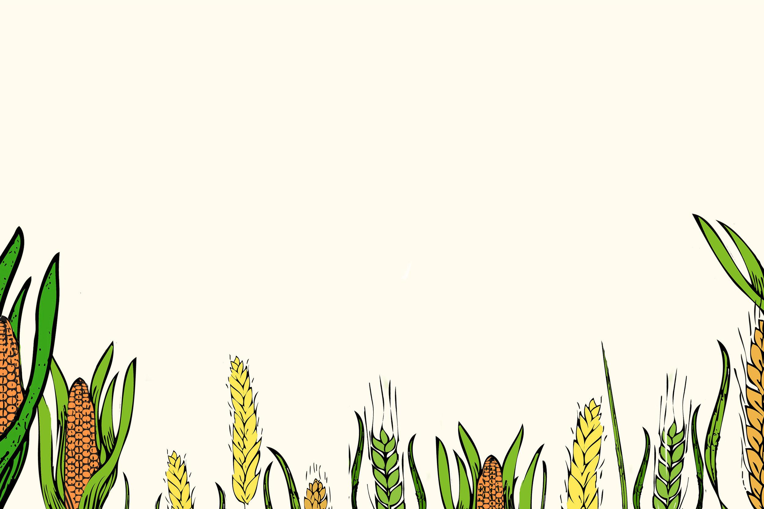 I nostri prodotti - Solo da grani italiani
