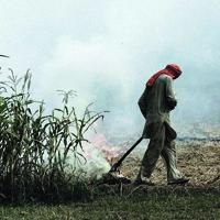 crop burning thumb.jpg
