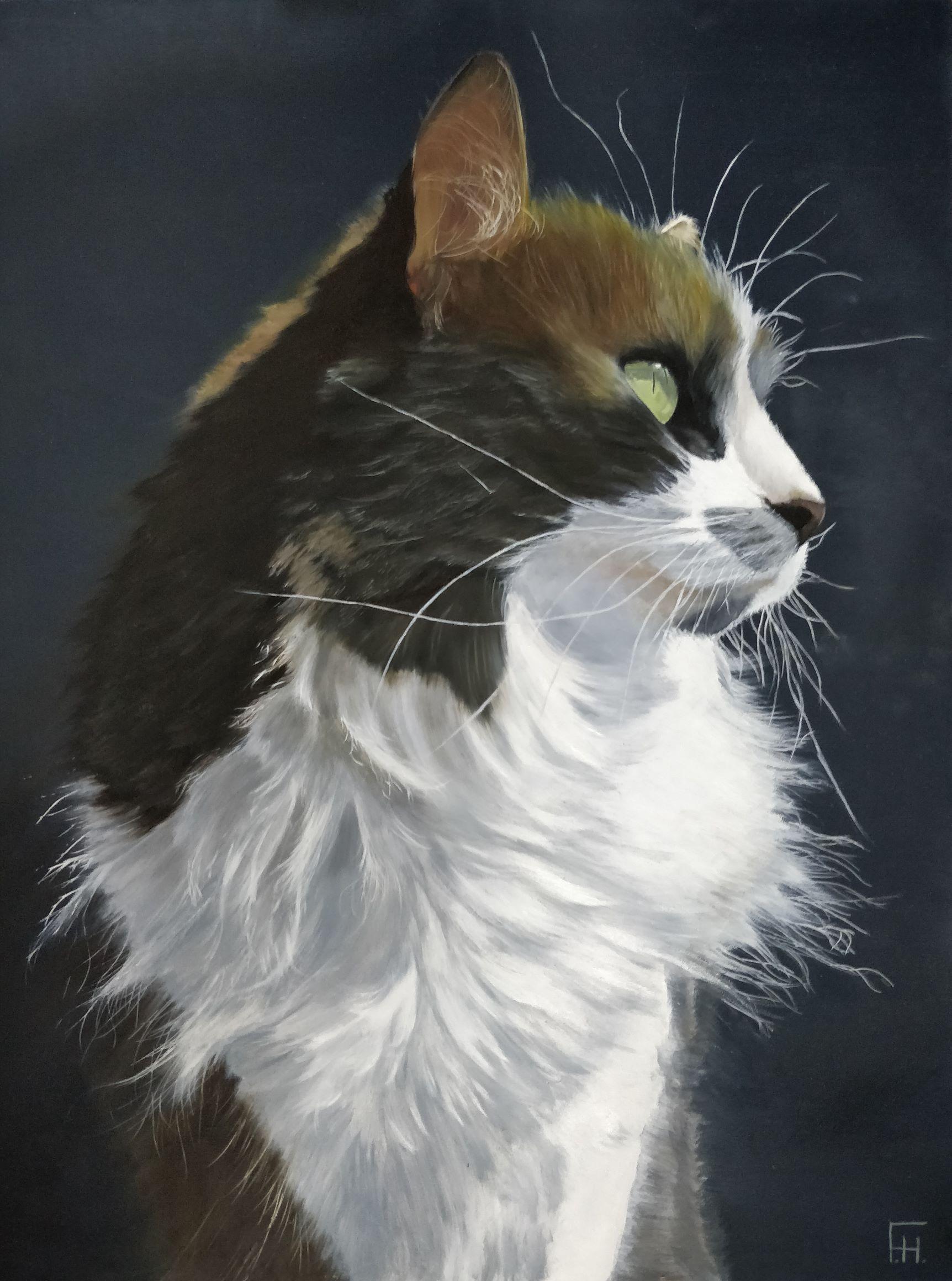 Kat the Cat