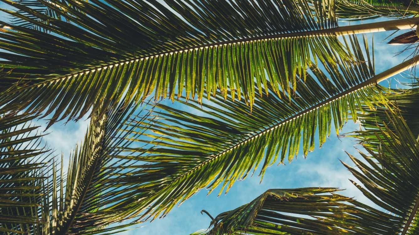 """….""""Tropical vibes all year round""""..""""Tropische vibes het hele jaar door""""…. -"""