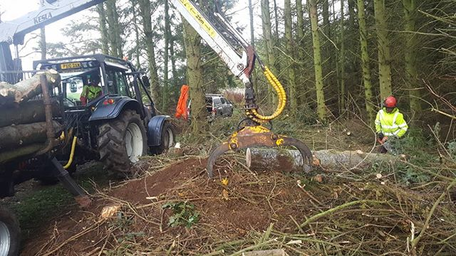 Clearing wind-blown softwoods for a domestic client. Our forestry tractor makes quick, easy work of winching and lifting trees, saving our backs and your money! Want the timber? We can shift it for you. Don't want the timber? We can take it away.