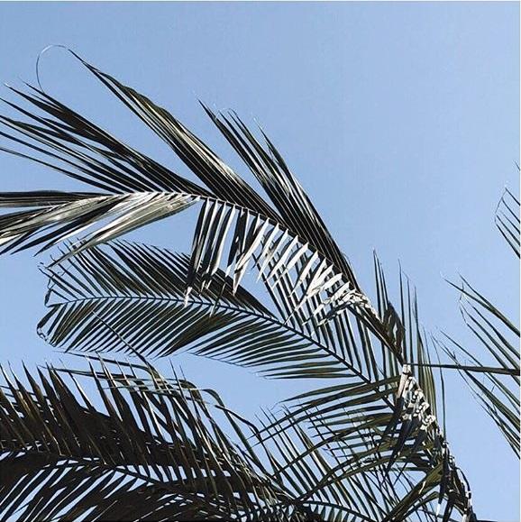 SD Palm.jpg