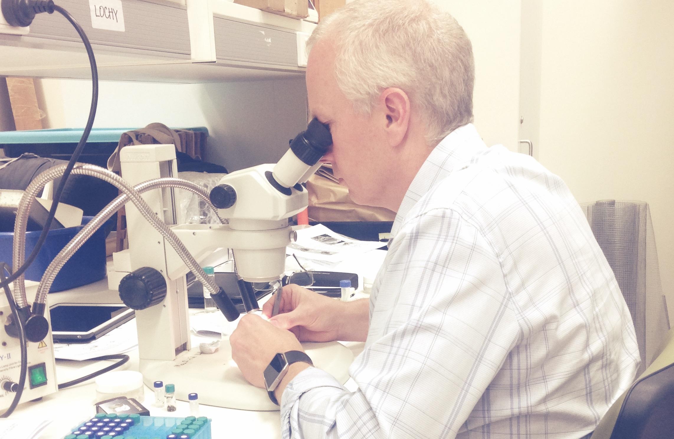 Phil Lester dissecting Hylaeus bees for analysis _Q'land Uni - Poolside rmx-B.jpg