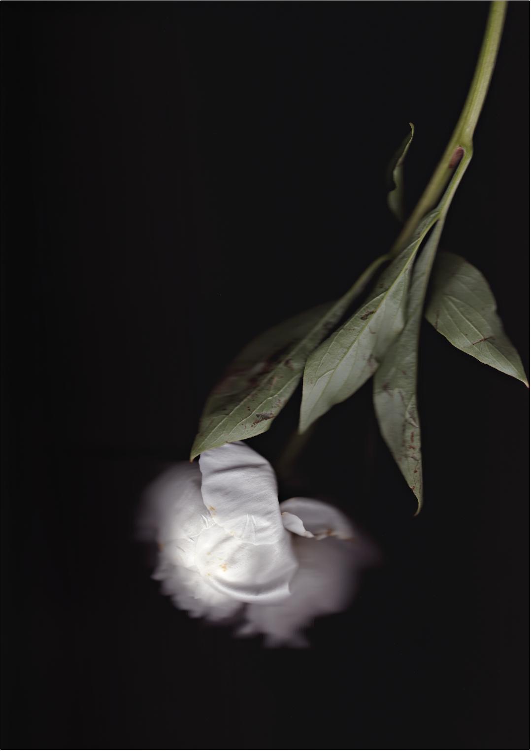 XX. NIGHT OF THE FLOWERS