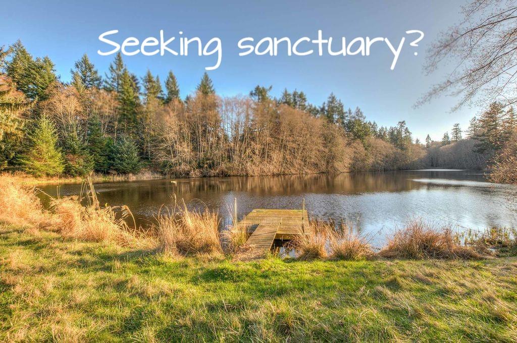 Seeking Sanctuary.jpg