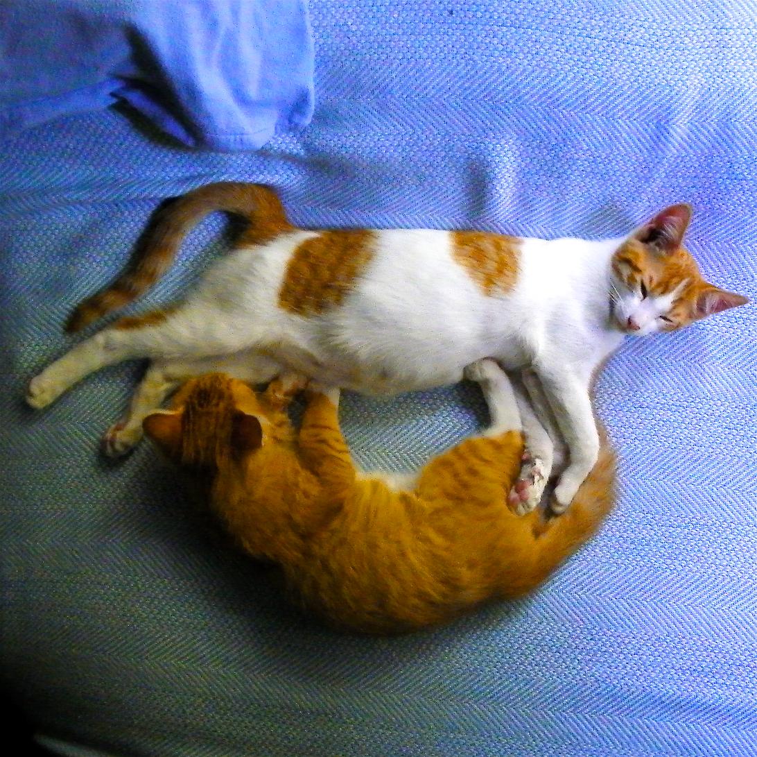 Kitties Smiley.jpg