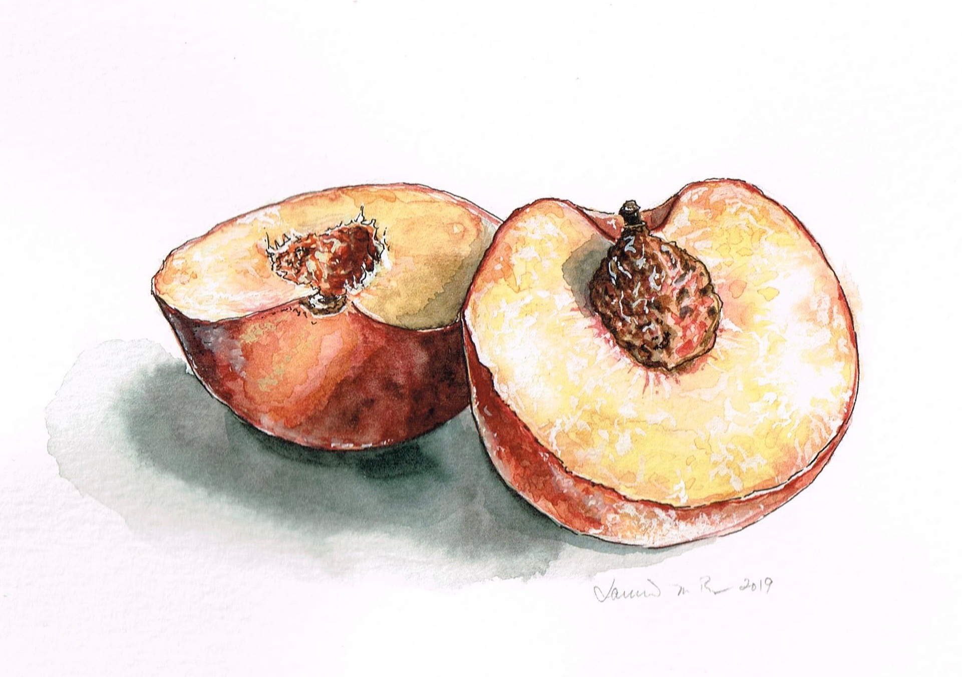 "Peach Season. Watercolor and gouache on paper, 6""x7"""